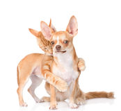 Cat hugs and bites puppy.  on white background Royalty Free Stock Photo