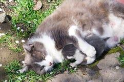 Cat hugs kitten Royalty Free Stock Photo
