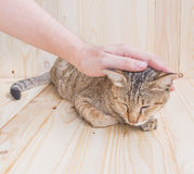 cat and human hand  on wood background Royalty Free Stock Photo