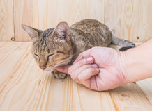 cat and human hand  on wood background Royalty Free Stock Photography