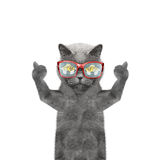 Cat is hungry and food reflected in his glasses. Isolate on white background Stock Photos