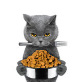 Cat is hungry and keeps food and fork Royalty Free Stock Images