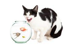 Cat Hungry For Pet Fish photographie stock libre de droits