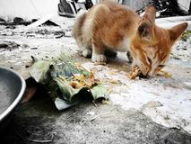Cat. The hungry cat was abandoned Royalty Free Stock Photo