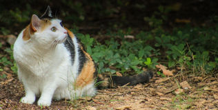 Cat-On the hunt Royalty Free Stock Image