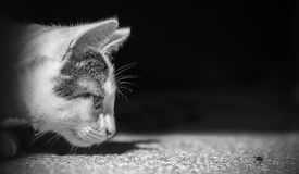 Cat hunt pet animal fly catch stock images