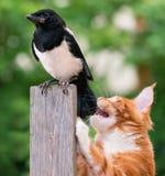 Cat hunted a bird Stock Image