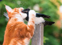 Cat hunted a bird Royalty Free Stock Photography