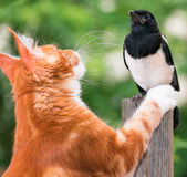 Cat hunted a bird Royalty Free Stock Photo