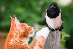 Cat hunted a bird Royalty Free Stock Image