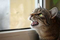 Cat hunter Royalty Free Stock Photos