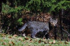 Cat hunter Stock Images