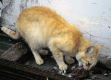 Cat hunter of birds stock images