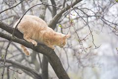 Cat hunter on tree in fog Stock Photo