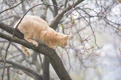 Cat hunter on tree in fog Stock Photo