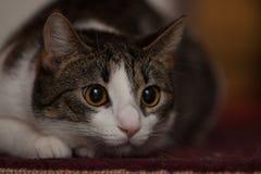 Cat Hunting royaltyfri foto