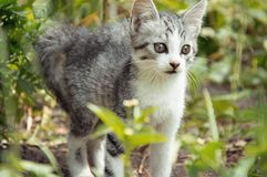 Cat Hunting Arkivfoto