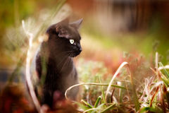 Cat Hunting stock images