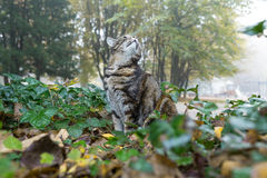 Cat hunting in city park Royalty Free Stock Images