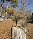 Cat Hunting en una cerca alta Post Imágenes de archivo libres de regalías