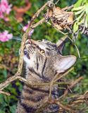 Cat hunting in the garden Royalty Free Stock Photo
