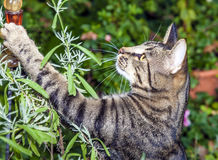 Cat hunting in the garden Royalty Free Stock Images