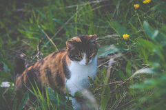 Cat hunting in grass Stock Images