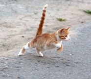 Cat hunting for mosquito Stock Image