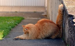 Cat hunting a mouse. In the garden Stock Photos
