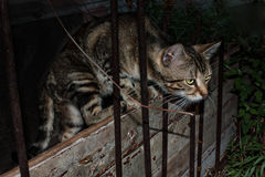 Cat hunting at night Royalty Free Stock Photo