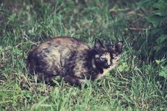 Cat living on the rural yard Stock Photography