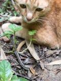 Cat Hunting Snake Immagine Stock Libera da Diritti