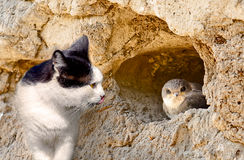 Cat hunts on a bird in nest Royalty Free Stock Photo