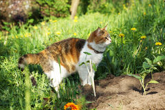 Cat hunts in the garden. Stock Image