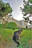 cat hunts in the park Stock Photo