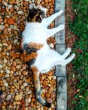 Cat. Hybrid Persian relaxing in the garden Royalty Free Stock Images