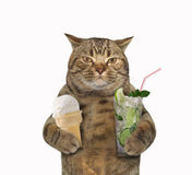 Cat with ice cream and cocktail  Royalty Free Stock Photo