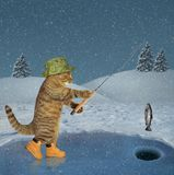 Cat on ice fishing. The cat in a green hat and boots is in winter fishing on ice of a frozen lake in the forest royalty free stock images