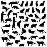 Cat icon collection Royalty Free Stock Images