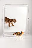 Cat identity. Little cat front of the mirror Royalty Free Stock Images