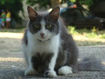 Cat_001 fotografia stock libera da diritti