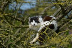 Cat on Ile de Re, France Stock Image