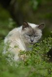Cat on Ile de Re, France Royalty Free Stock Photography