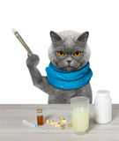 Cat is  ill and drinks the medication. Isolated on white background Stock Photography