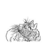 Cat Illustration Images libres de droits