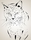 Cat illustration Royalty Free Stock Photo