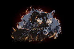 CAT ILLUSTRATION fire with big yellow eyes. Colour black on a dark background. FOR USE design, decoration, printing, smart phone, website, etc Royalty Free Stock Photos