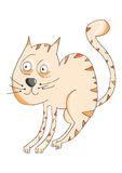 Cat. Illustration of a lovely orange cat vector illustration