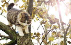 Cat. Image with a beautiful cat in the tree Royalty Free Stock Photography