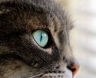 Cat. Image of a cat looking at you Stock Images